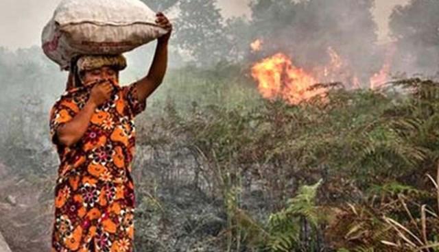 Musim Kemarau Meluas, BMKG: Waspada Potensi Kebakaran Hutan dan Lahan